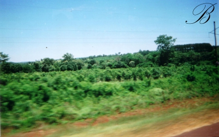 Traveling through Misiones province