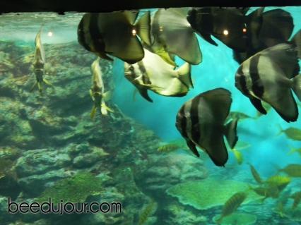 Busan aquarium 2