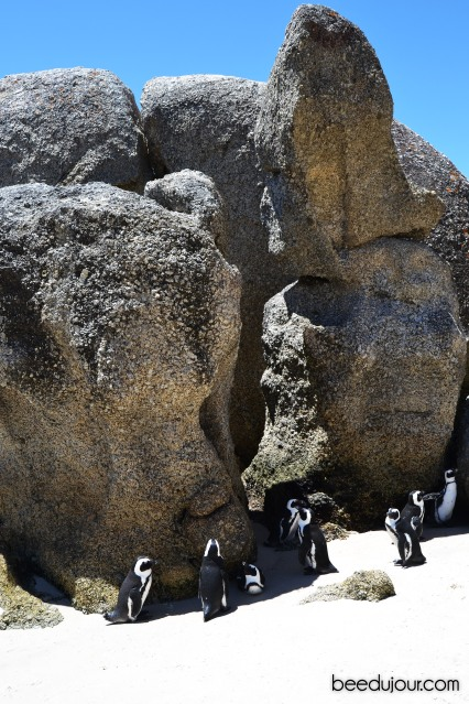 boulders beach big rocks