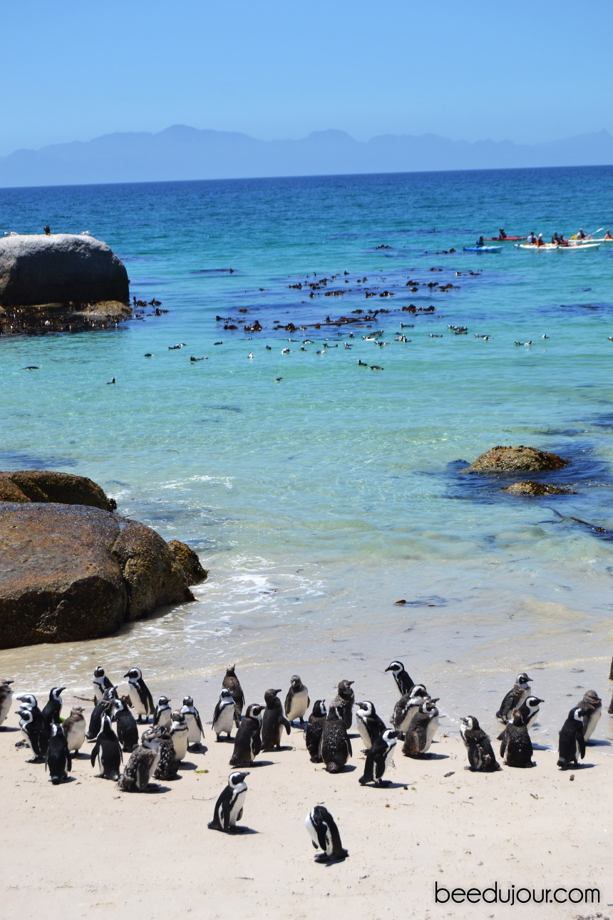 boulders beach breeding area