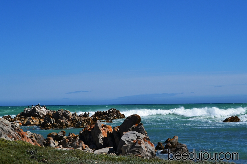 Cape Agulhas landscapes