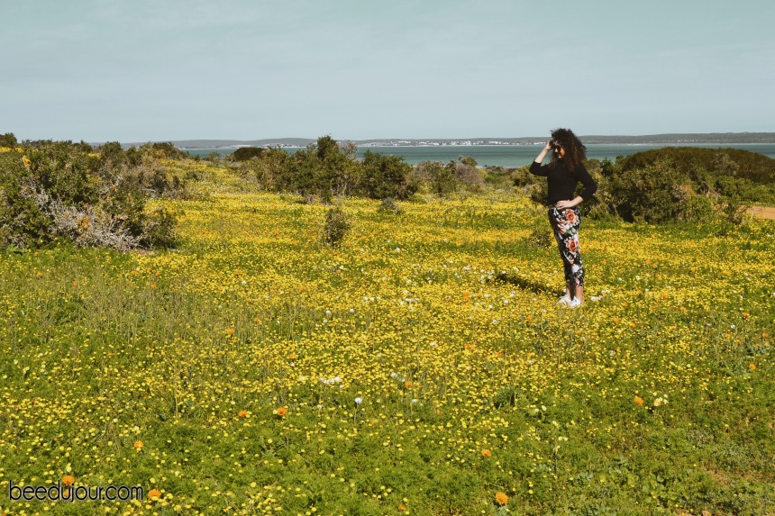 west coast national park yellow field