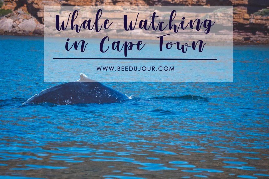 cape town whale watching feat