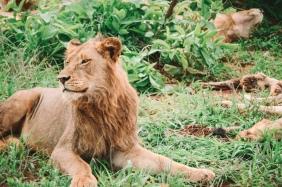 honeyguide safari pride 2