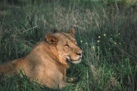 honeyguide safari pride 5