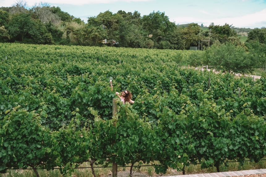 pink valley wines in the vines 3